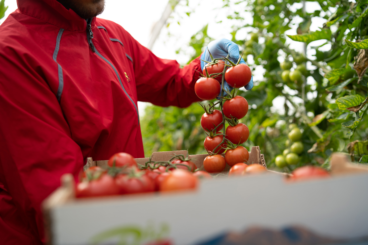 https://treze.marketing/wp-content/uploads/2021/08/biosabor-tomate-1.jpg